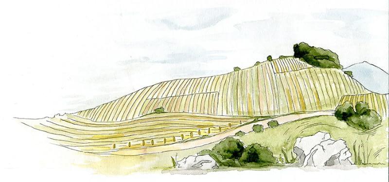 vino_krajina